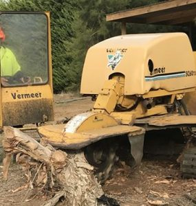 Tree Services Adelaide Hills